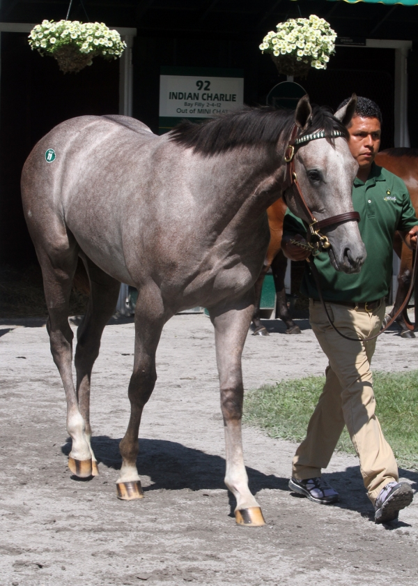 Hip 11,  2013 The Sarataoga Selected Yearling Sale