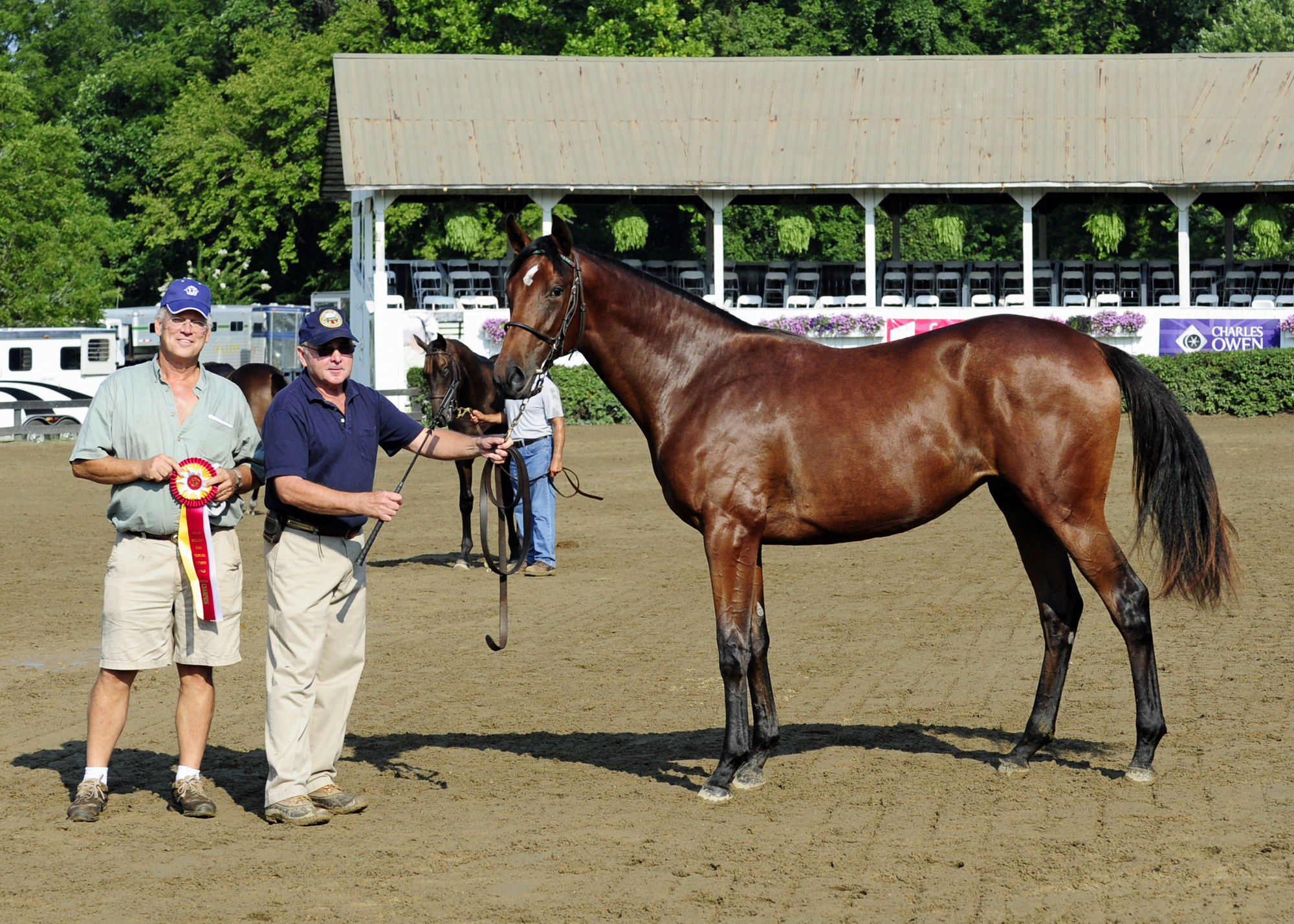 PHOTOS OF THE DAY: 2013 VBF YEARLING FUTURITY | OLD DOMINION