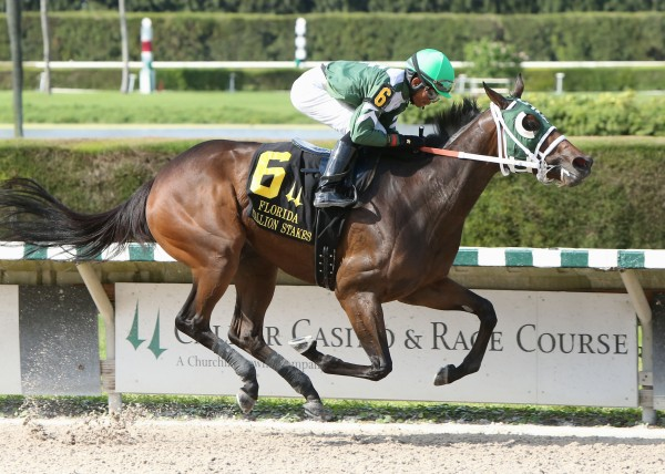 SCANDALOUS_ACT_The_Florida_Stallion_Stakes_of_2013_-_My_Dear_Girl_Division_10-12-13_CRC_Finish