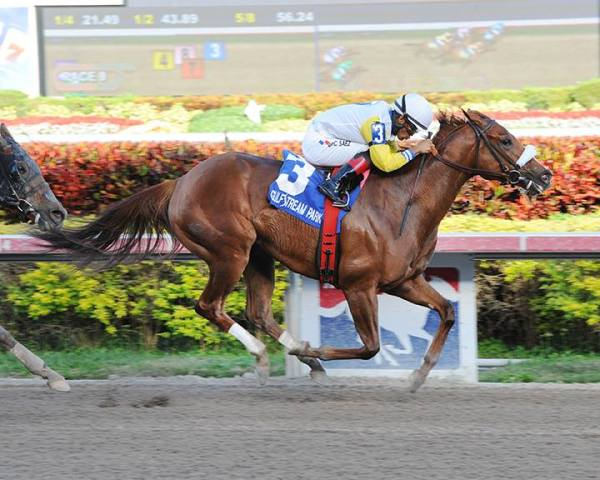 Munnings SisterMunnings Sister and Luis Saez winning the $75,000 Awesome Feather Stakes on February 6, 2014 at Gulfstream Park. (Gulfstream Park/Leslie Martin Photo)